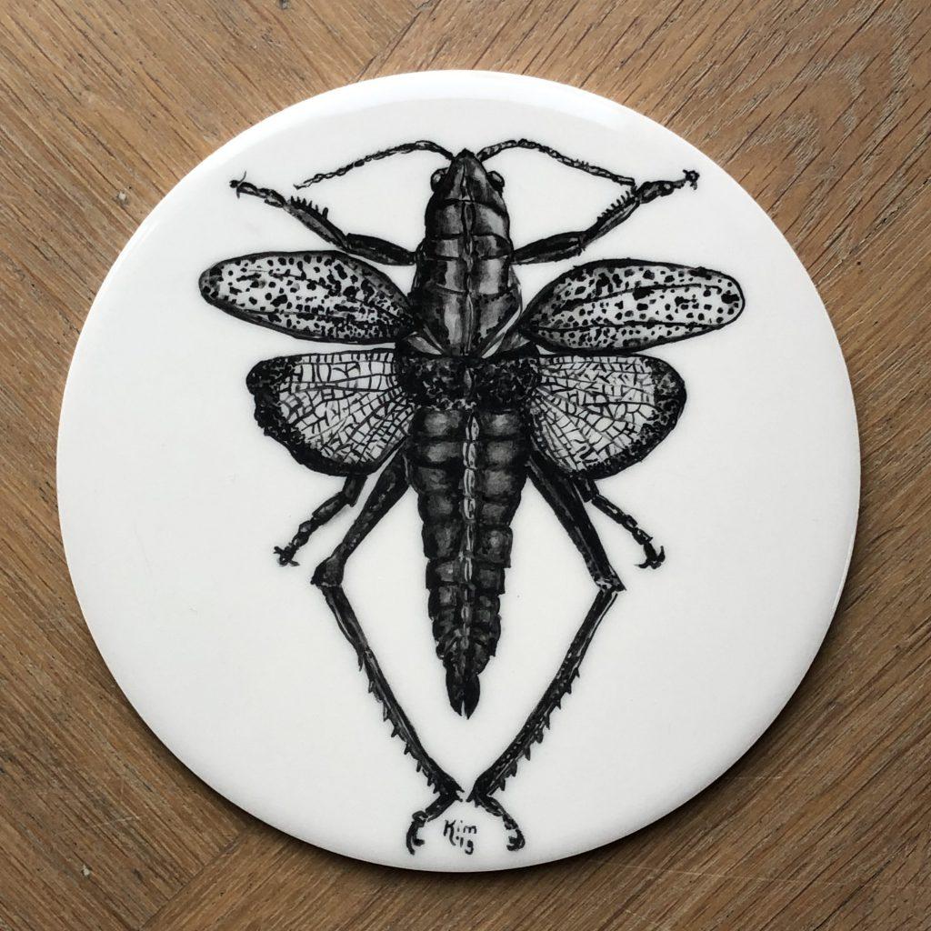 Regenboogsprinkhaan (romalia microptera)